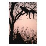 Africa, Botswana, Okavango Delta. Leopard Photo Print