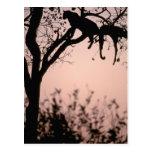 Africa, Botswana, Okavango Delta. Leopard Postcards