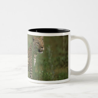 Africa, Botswana, Okavango Delta. Leopard Two-Tone Coffee Mug