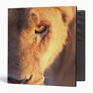 Africa, Botswana, Okavango Delta. Lion close 3 Ring Binders
