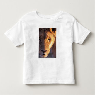 Africa, Botswana, Okavango Delta. Lion close Toddler T-shirt