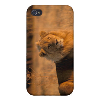 Africa, Botswana, Okavango Delta. Lion (Panthera Cover For iPhone 4