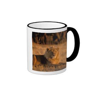 Africa, Botswana, Okavango Delta. Lion (Panthera Ringer Coffee Mug