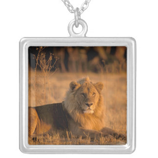 Africa, Botswana, Okavango Delta. Lion (Panthera Silver Plated Necklace
