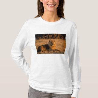 Africa, Botswana, Okavango Delta. Lion (Panthera T-Shirt