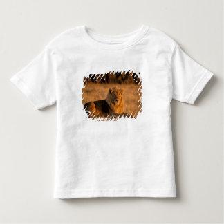 Africa, Botswana, Okavango Delta. Lion (Panthera Toddler T-shirt