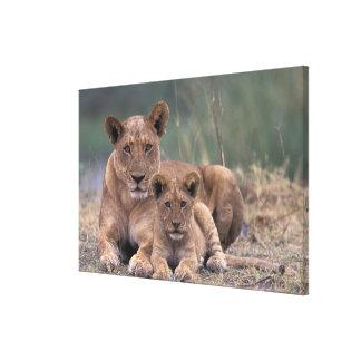 Africa, Botswana, Okavango Delta. Lions Canvas Print
