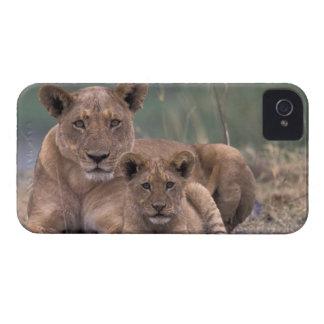 Africa Botswana Okavango Delta Lions Blackberry Cases