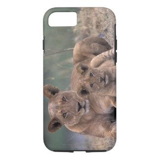 Africa, Botswana, Okavango Delta. Lions iPhone 7 Case