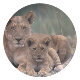 Africa, Botswana, Okavango Delta. Lions Melamine Plate
