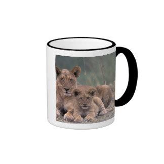 Africa, Botswana, Okavango Delta. Lions Ringer Coffee Mug