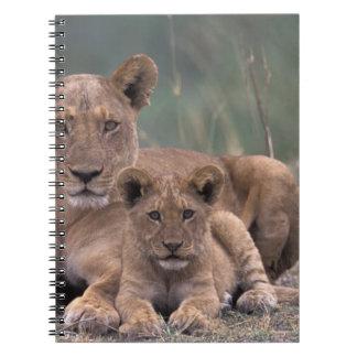 Africa, Botswana, Okavango Delta. Lions Notebook