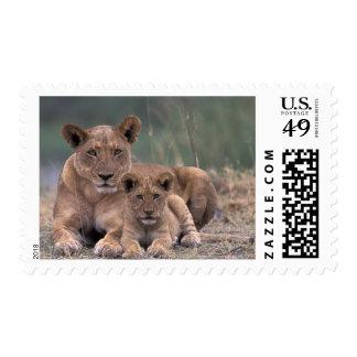 Africa, Botswana, Okavango Delta. Lions Stamp