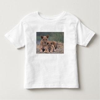 Africa, Botswana, Okavango Delta. Lions Toddler T-shirt
