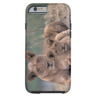Africa, Botswana, Okavango Delta. Lions Tough iPhone 6 Case