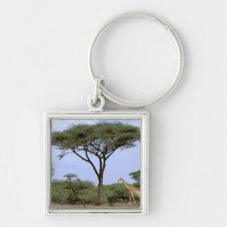 Africa, Botswana, Okavango Delta. Southern Keychain