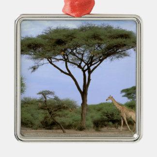 Africa, Botswana, Okavango Delta. Southern Metal Ornament