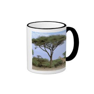 Africa, Botswana, Okavango Delta. Southern Mug