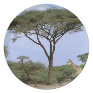 Africa, Botswana, Okavango Delta. Southern Plate