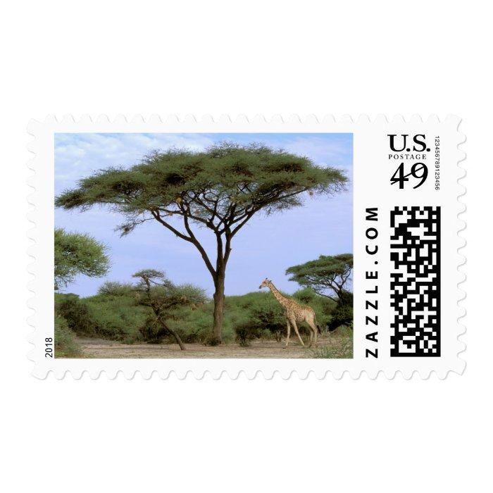 Africa, Botswana, Okavango Delta. Southern Postage Stamp