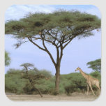 Africa, Botswana, Okavango Delta. Southern Square Sticker