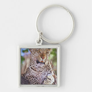 Africa, Botswana, Okvango Delta, wild leopard. 2 Keychain