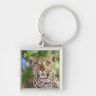 Africa, Botswana, Okvango Delta, wild leopard. Keychain