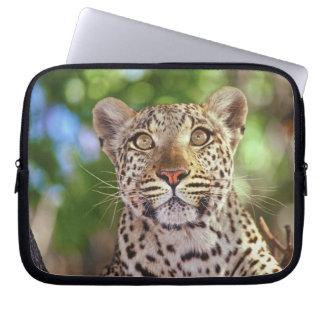 Africa, Botswana, Okvango Delta, wild leopard. Laptop Sleeve