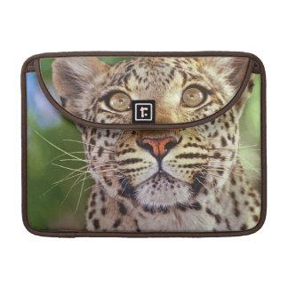 Africa, Botswana, Okvango Delta, wild leopard. Sleeve For MacBooks