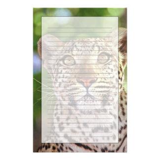 Africa, Botswana, Okvango Delta, wild leopard. Stationery