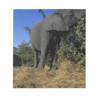 África, Botswana, parque nacional de Chobe, elefan Blocs De Notas