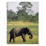 África, Botswana, parque nacional de Chobe. Elefan Libro De Apuntes