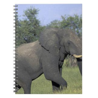 ÁFRICA, Botswana, parque nacional de Chobe, elefan Spiral Notebook