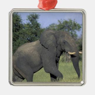 ÁFRICA, Botswana, parque nacional de Chobe, elefan Adorno