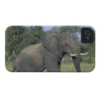ÁFRICA, Botswana, parque nacional de Chobe, elefan iPhone 4 Protectores