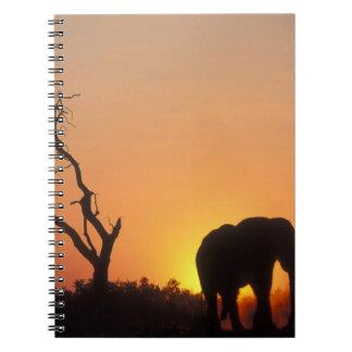 África, Botswana, parque nacional de Chobe, fijand Libreta Espiral