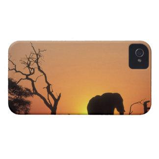 África, Botswana, parque nacional de Chobe, iPhone 4 Case-Mate Cárcasas