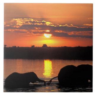 África, Botswana, parque nacional de Chobe, manada Azulejo Cuadrado Grande