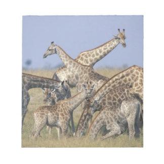 África, Botswana, parque nacional de Chobe, manada Bloc De Notas