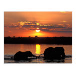 África, Botswana, parque nacional de Chobe, manada Tarjetas Postales