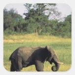 África, Botswana, parque nacional de Chobe. Pegatina Cuadrada