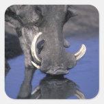 África, Botswana, parque nacional de Chobe, Calcomanías Cuadradases