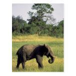 África, Botswana, parque nacional de Chobe. Postal