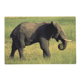 África, Botswana, parque nacional de Chobe. Tapete Individual