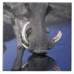 África, Botswana, parque nacional de Chobe, Wartho Tejas