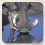 África, Botswana, parque nacional de Chobe, Wartho Posavasos