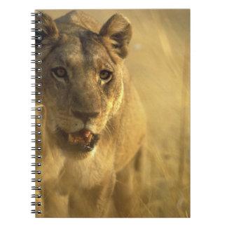 África, Botswana, reserva del juego de Moremi, leo Notebook