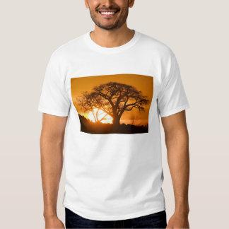 Africa, Botswana, Setting sun silhouettes Baobab T-Shirt