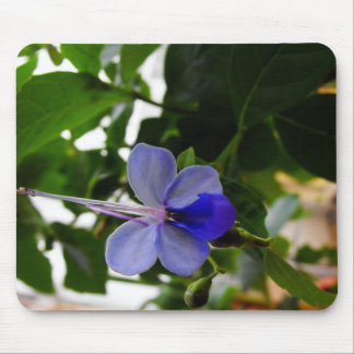 Africa Butterfly Bush Flower Mouse Pad
