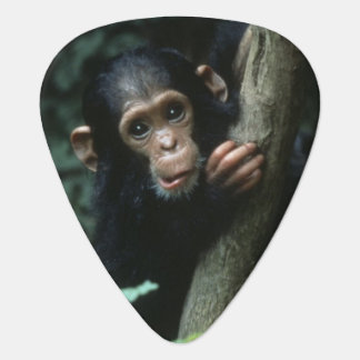 Africa, East Africa, Tanzania, Gombe National 2 Guitar Pick